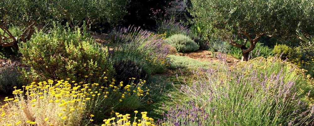 assas-jardins-mediterraneen-sec-sans-arrosage-paysagiste-entretien-creation-pelouse-gazon-graviers-bassin-fontaine-jardinerie-herault-montpellier-paves-1